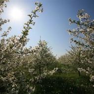 Proljetna prodajna sezona u Karolina rasadniku!