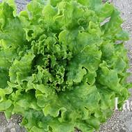 Salata Lasydo