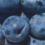 Šljiva - Top five - sadnice