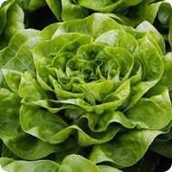 Salata Baglin