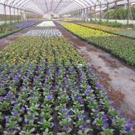Cvijeće za vrtove i okućnice