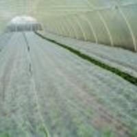 Agril, lutrasil,agrotekstil (17g) -tkanina za pokrivanje biljaka i zemljišta