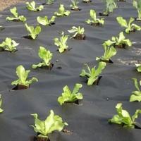 Vrtna mulch tkanina 50 g/m2