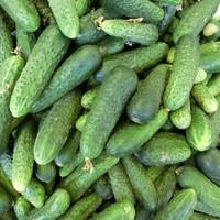 Krastavci (salatni)