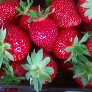 Prodajemo ukusne i eko jagode
