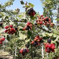 Naši plodovi i vrtovi