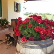 Druženja u našoj vinariji