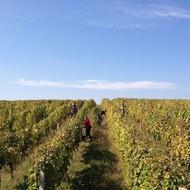 Vinogradi Vina Papak