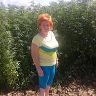 Uzgoj konoplje na OPG Kalić