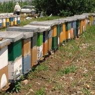 Pčelarstvo Popaj
