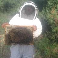Saveti za uspešno pčelarenje