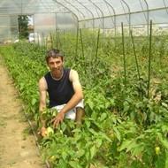 Ekološka proizvodnja povrća