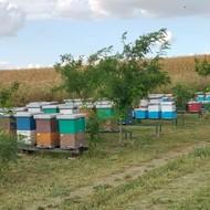 Radovi na pčelinjaku u mesecu septembru i oktobru