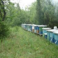 Kako započeti sa pčelarstvom