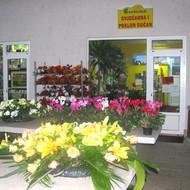 Proizvodnja cvijeća u Gabrijela d.o.o.