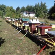 Pčelinjak i Apikomora Tonda