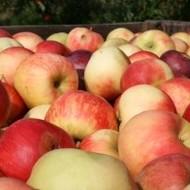Priopćenje o pravnom položaju sorti jabuka