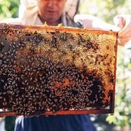 Kako izvršiti pregled pčelinjeg društva?