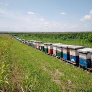 Podsetnik voćarima i pčelarima: Kako pravilno prskati voće u vreme cvetanja