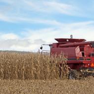 Siguran otkup i veća cijena crvenog kukuruza!