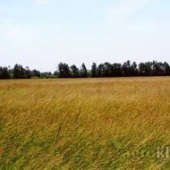 Krmno bilje - Vlasulja livadna - ZELENA DOLINA