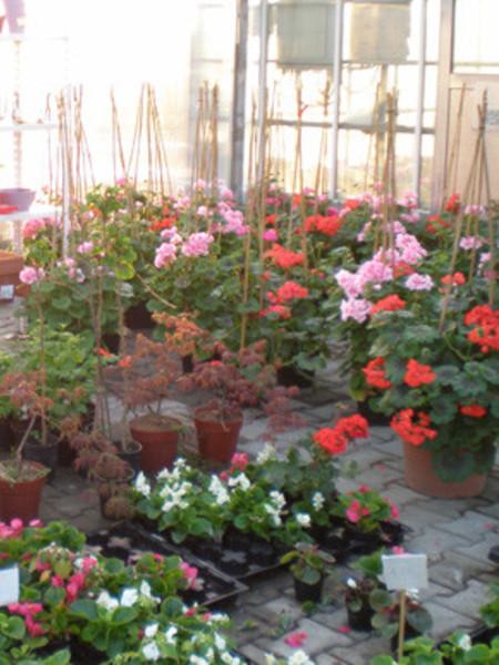 Veliki izbor ukrasnog bilja, profi i hobi opreme